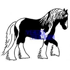 Gypsy Cob Horse 5