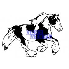 Gypsy Cob Horse 7
